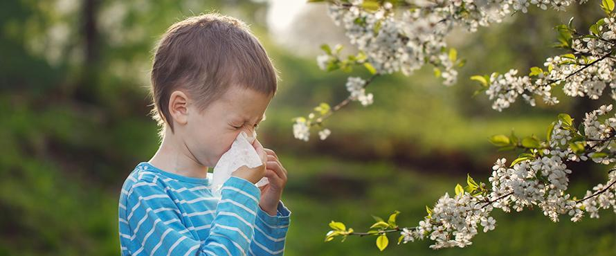 Reducing Spring Allergies in Your Home